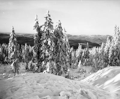 Utsikt fra Tryvann skøytebane mot Sørkedalen