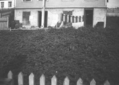 Familien Hauges hage i Nyborgveien i Vadsø under krigen
