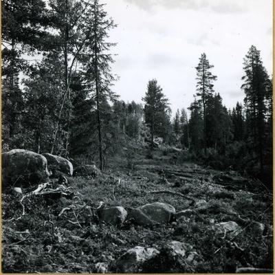 Skogsområde.