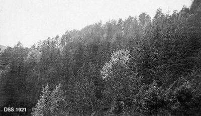 Landskapsbilde fra Hellebust skog i Flekke-komplekset i Nordfjord
