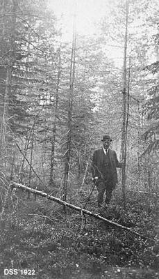 Skogparti fra Hovland i Flekke-komplekset i Sunnfjord