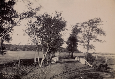 Thorsø Allee